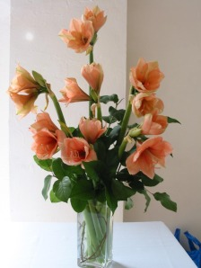 Amaryllis in Peach