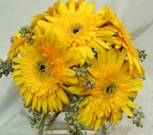 A tight nosegay of yellow gerbera daisies presented in a geometric vase.  Catalog item SQ043, by Starbright Floral Design
