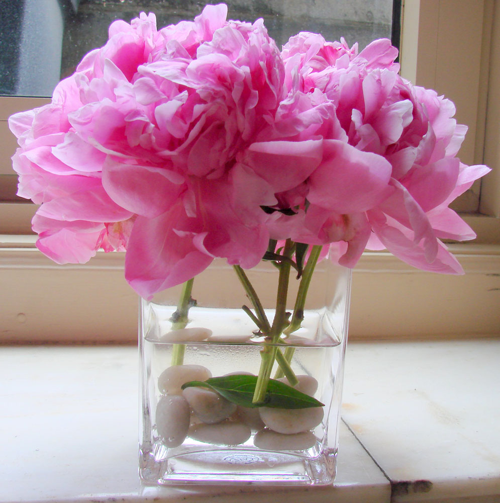 Peony Flowers In Nyc By Starbright Floral Design Springtime