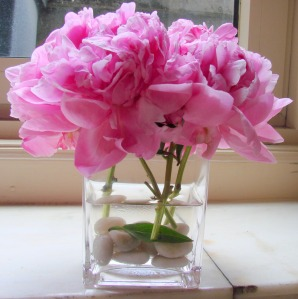 Pink Peonies from North Carolina