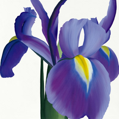 Iris by Starbright Floral Design