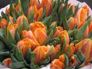 Visit our website for amazing tulip choices!