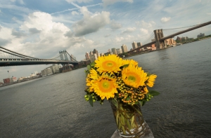 Sunflowers in East River