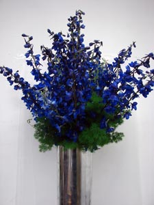 Blue Delphinium by Starbright