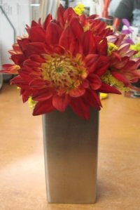 Beautiful Dahlias available for NYC flower delivery
