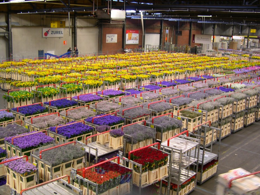 Aalsmeer Flower Auction warehouse