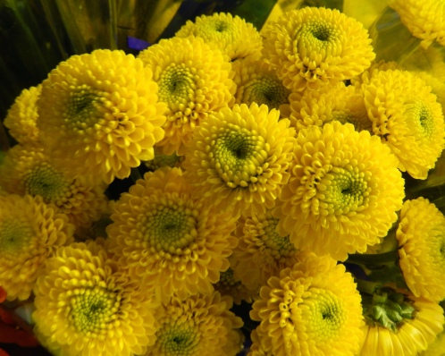 Chrysanthemum Buttons