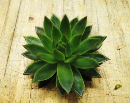 Succulent at Starbright Floral Design