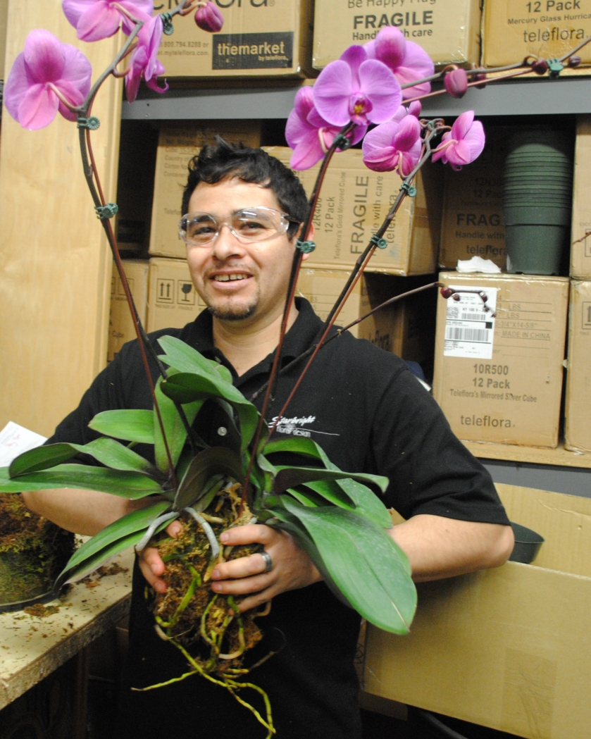 Orchid Preperation