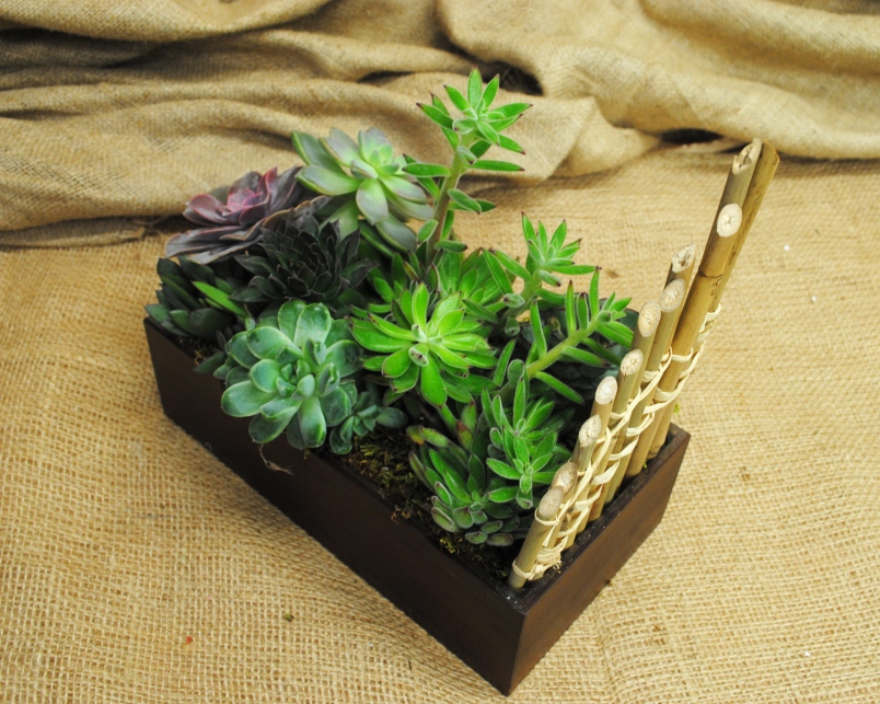 Boys like plants too!