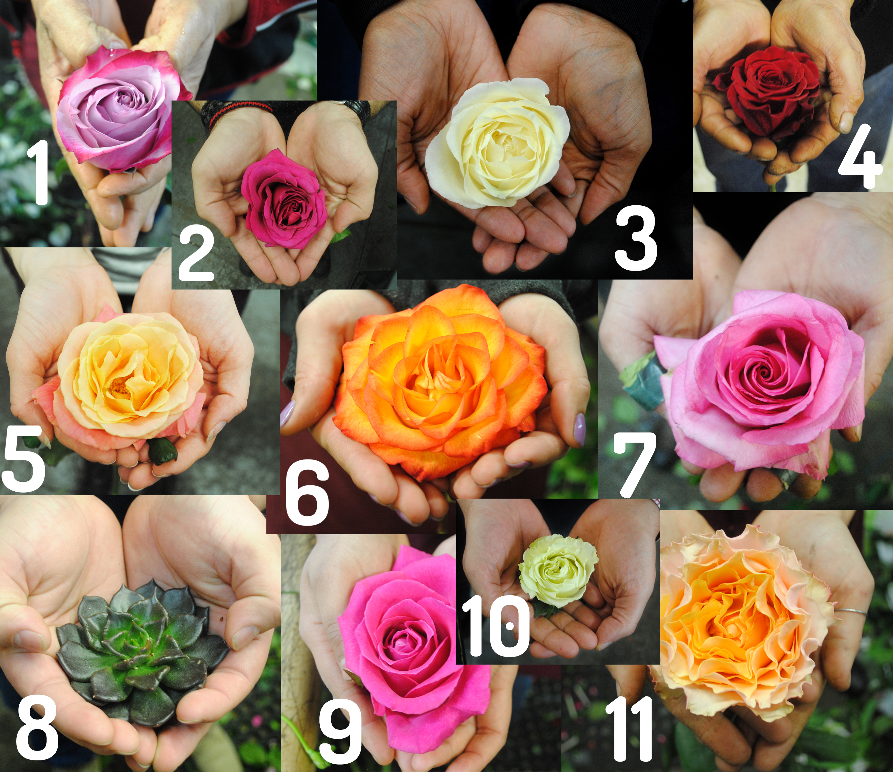 The Nyc Starbright Team Shows Off Their Favorite Roses