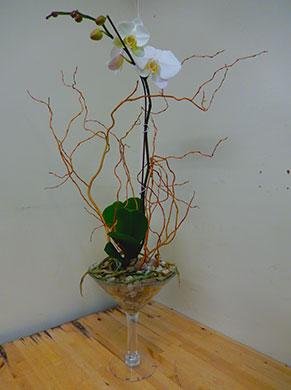 orchid-martini-445x390