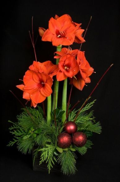 Stately amaryllis brings heightened elegance to holiday decor.