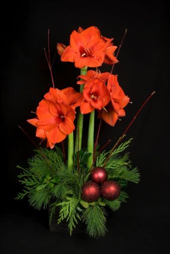 Amaryllis is a great choice for the holidays and beyond.