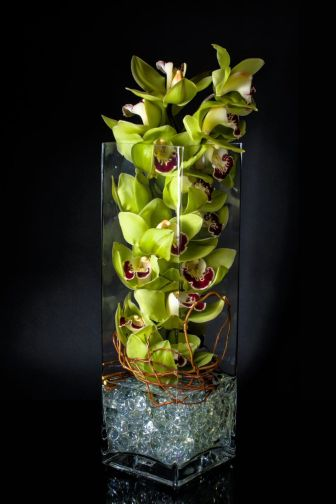 Green cymbium orchid blooms create a sensational statement.