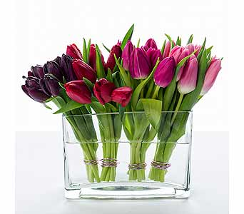 Starbright's Tulips' Kiss echoes the Dutch fancy of blocks of tulip colors.